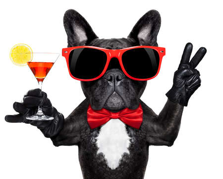 aperitif: french bulldog dog holding martini cocktail glass ready to have fun and party, isolated on white background#