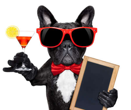 french: french bulldog dog holding martini cocktail glass ready to have fun and party,holding a blank blackboard, isolated on white background