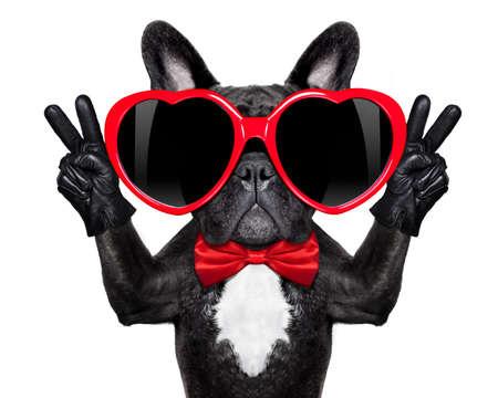 dog days: perro bulldog francés feliz y enamorada, que muestra los dedos de la paz y la victoria, aislado en fondo blanco