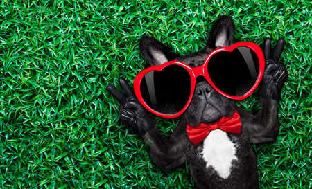 french bulldog dog lying on the grass with love , peace and harmony finger, wearing a red heart shape sunglasses