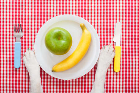 dog food bowl with an apple and banana , with knife and fork  on tablecloth,paws of a dog photo