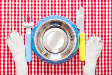 empty dog food bowl with knife and fork on tablecloth,paws of a dog photo
