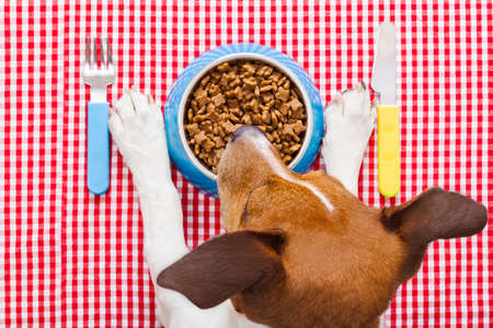 full dog food bowl with knife and fork on tablecloth,paws and head of a dog photo