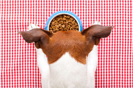 starving: dog food bowl on tablecloth,paws and head of a dog