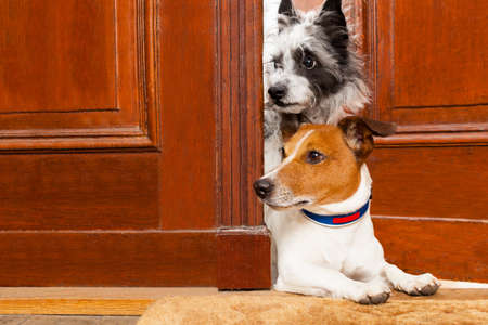 guard house: couple of dogs watching and looking , at the door at home , on the doormat
