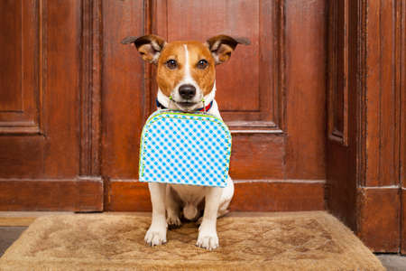 homecoming: jack russell terrier dog left alone outside home  with luggage , ready to go on his own Stock Photo