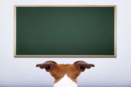 jack russell dog in front of blackboard, learning at school and training