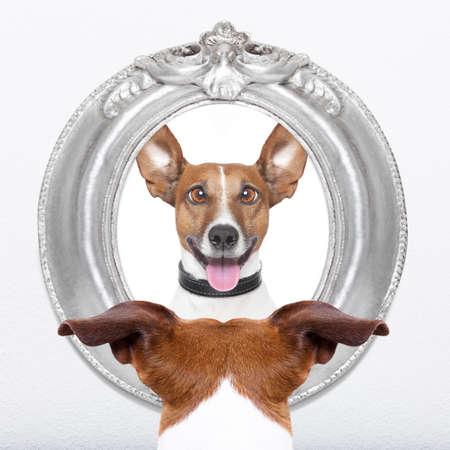perros graciosos: jack russell perro mirando el espejo su cara loca tonta divertida Foto de archivo