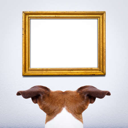 poner atencion: jack russell perro detrás, delante de un viejo marco retro en blanco y vacío, prestando atención para el mensaje importante, en una pared de la casa blanca
