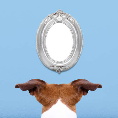 pay wall: jack russell in front of a blank and empty old retro frame, paying attention for the important message,from behind and back