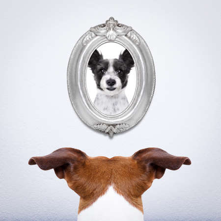 groomer: jack russell dog from back behind , watching or staring his big love in a frame at the wall, remembering old good times