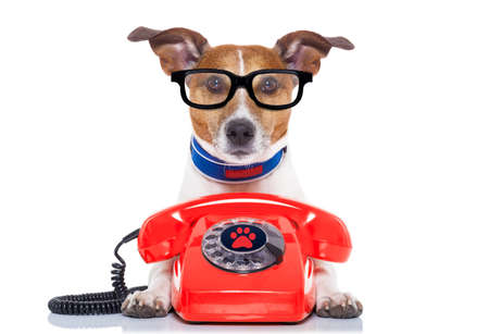 Jack russell hund med glasögon som sekreterare eller operatör med röd gammal telefon eller retroklassiker telefon