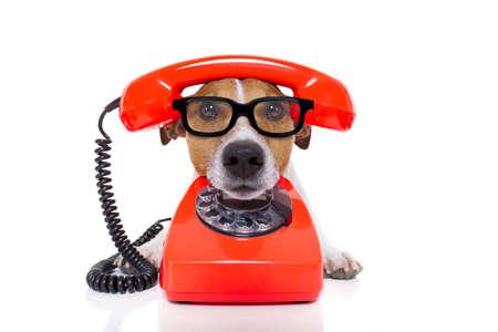 telefono antico: cane jack russell con gli occhiali come segretaria o operatore rosso vecchio telefono o telefono retr� classico
