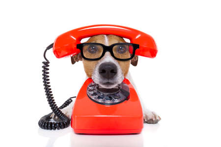 funny animal: jack russell dog with glasses as secretary or operator with red old  dial telephone or retro classic phone Stock Photo