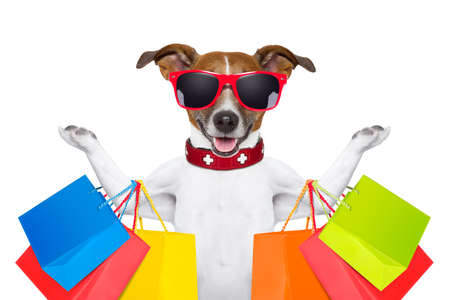 pet store: jack russell dog  with shopping bags ready for discount and sale at the  mall, isolated on white background