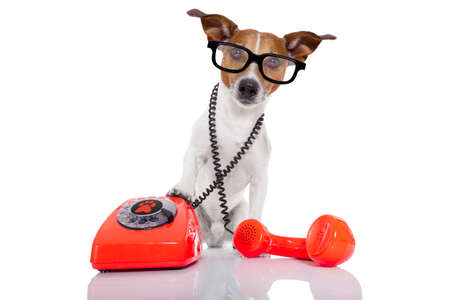 to phone calls: jack russell dog with glasses as secretary or operator with red old  dial telephone or retro classic phone Stock Photo