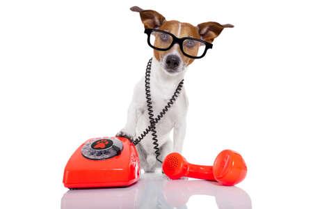 jack russell hond met een bril als secretaresse of operator met rode oude telefoon of retro klassieke telefoon