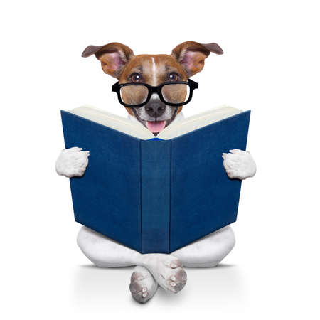 dog school: jack russell dog sitting reading a big book, isolated on white background