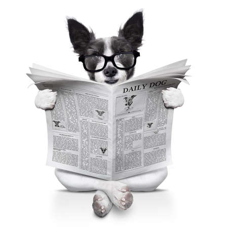 paw smart: terrier dog reading newspaper sitting on the ground or floor,  isolated on white background Stock Photo
