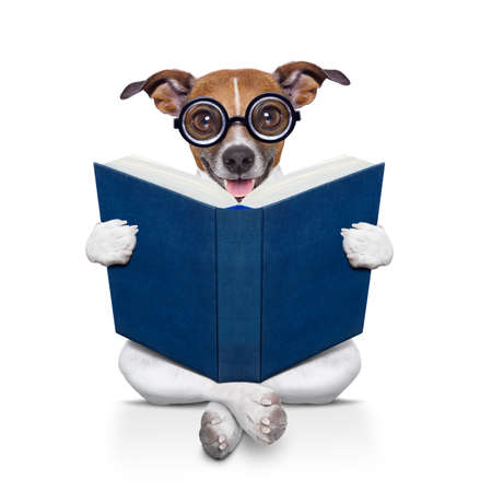 paw smart: jack russell dog sitting reading a big book, isolated on white background
