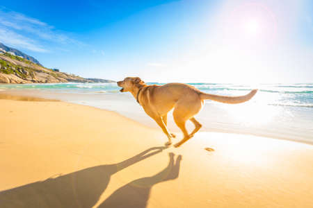 active: terrier dog having fun,running , jumping and playing at the beach on summer holidays Stock Photo