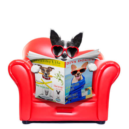 paw smart: terrier dog reading magazine and tabloids on a red sofa , couch, or lounger , in living room , isolated on white background