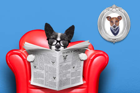 paw smart: terrier dog reading newspaper on a red sofa , couch, or lounger , in living room , isolated on blue wall