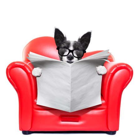 couch potato: terrier dog reading blank empty newspaper on a red sofa , couch, or lounger , in living room , isolated on white background