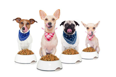 animals and pets: row of dogs as a group or team , all hungry and tonge sticking out ,in front of food bowls , isolated on white background
