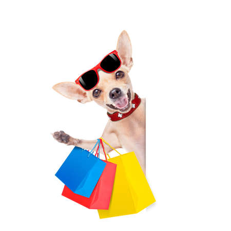chihuahua  dog with a bunch of shopping bags ready to buy everything on sale and with discount, isolated on white background