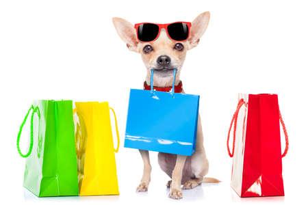 perros graciosos: perro chihuahua con bolsas de la compra listo para el descuento y la venta en el centro comercial, aisladas sobre fondo blanco Foto de archivo