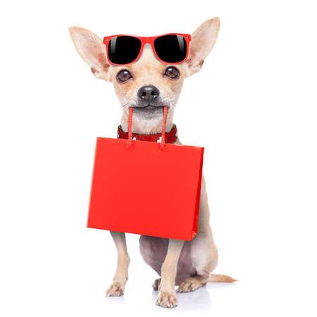 Chihuahua Hund hält eine Einkaufstasche bereit für Rabatt und Verkauf in der Mall, isoliert auf weißem Hintergrund