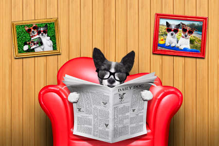 newspaper print: terrier dog reading newspaper on a red sofa , couch, or lounger , in living room , isolated on wood wall