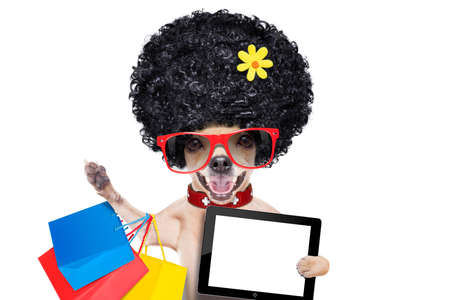 chihuahua dog with shopping bags , holding a blank pc computer tablet screen  ,ready for discount and sale at the  mall, isolated on white background photo
