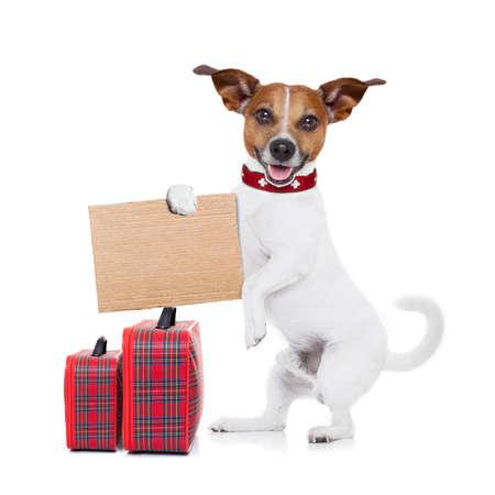 Stopař jack russell pes čeká na auto pro vyzvednutí drží karton s zavazadly, izolovaných na bílém pozadí