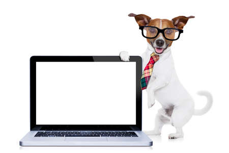 white dog: jack russell dog office worker with tie, black glasses holding a tablet pc computer laptop,  isolated on white background