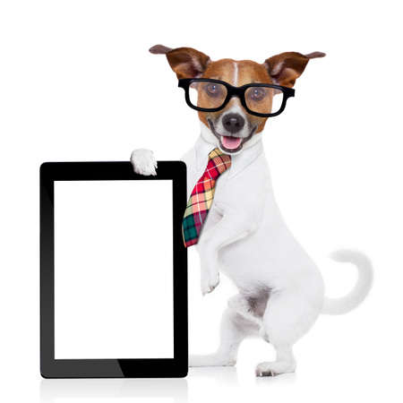 jack russell dog office worker with tie, black glasses holding a tablet pc computer laptop,  isolated on white background photo
