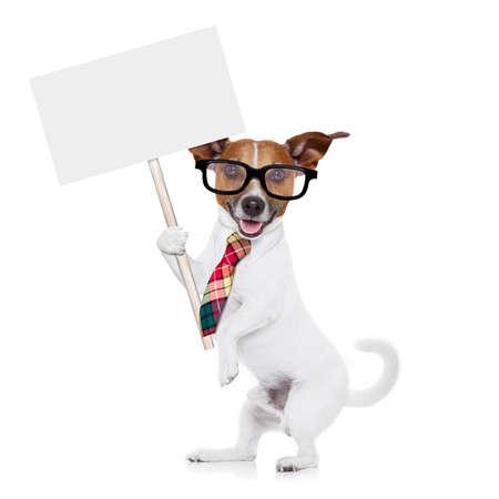anteojos: jack russell oficinista perro con corbata, gafas negras que sostienen un cartel blanco vacío en blanco, aislado en fondo blanco