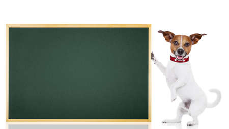 graduation suit: jack russell dog as school student  holding a blackboard , isolated on white background