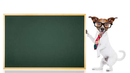graduation suit: jack russell dog as school teacher holding a blackboard , isolated on white background Stock Photo