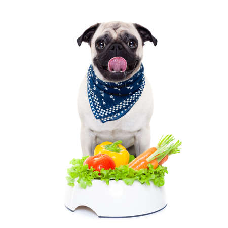pug dog  with  healthy  vegan food bowl, isolated on white background photo