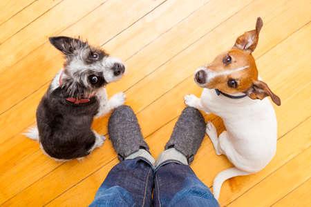 dos perros mendicidad mirando al dueño pidiendo a pie y el juego, en el suelo dentro de su casa Foto de archivo