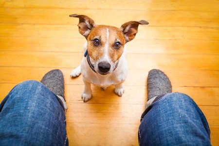 perros graciosos: jack russell perro listo a dar un paseo con el due�o de la mendicidad, sentarse y esperar, en el suelo dentro de su casa