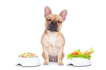 продукты питания: французский бульдог собака имеет выбор между правом и неправильно здорового нездоровой пищи, изолированных на белом фоне