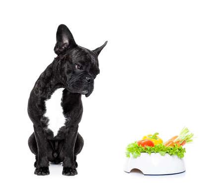 食べ物: 健康な菜食主義者のフードボウル、白い背景で隔離のフレンチ ブルドッグ犬