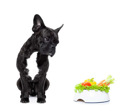 comida: perro bulldog francés con saludable plato de comida vegetariana, aislado sobre fondo blanco Foto de archivo