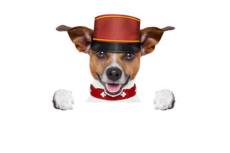 pet  animal: jack russell bellboy dog behind a blank and empty banner or placard at hotel, where pets are welcome and allowed,isolated on white background Stock Photo