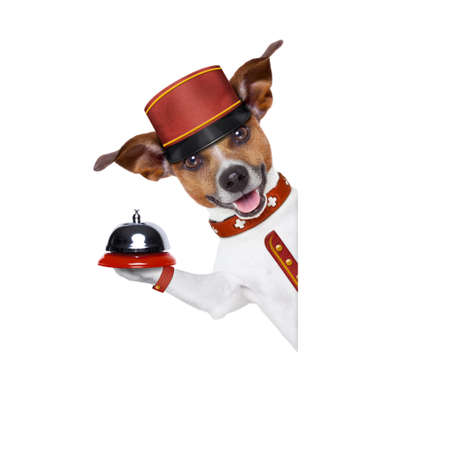 holiday pets: jack russell bellboy dog behind a blank and empty banner or placard at hotel, where pets are welcome and allowed,isolated on white background Stock Photo