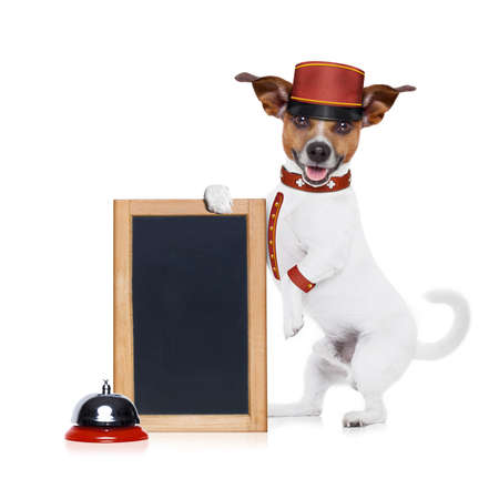 doorkeeper: jack russell bellboy dog holding a blank and empty blackboard at hotel, where pets are welcome and allowed,isolated on white background