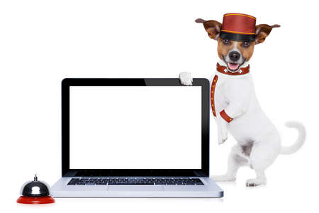 blank tablet: jack russell bellboy dog holding a blank and empty tablet pc computer screen at hotel, where pets are welcome and allowed,isolated on white background